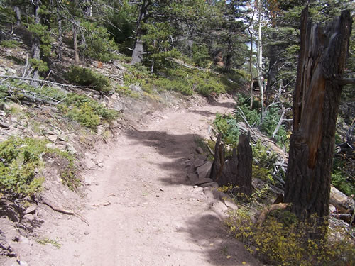 San Carlos Trail Reconstruction